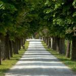 Tree-lined road, Italy