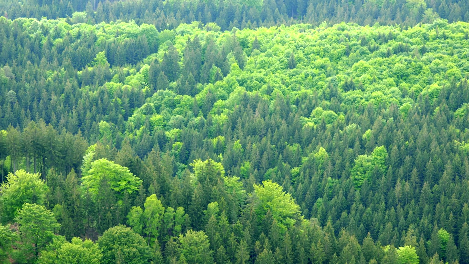 a-vast-and-thick-forest-area-top-view_schvdvgtl_thumbnail-full01
